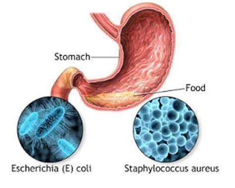 Borne Fruit Definition   definition of foodborne botulism medical help health tips