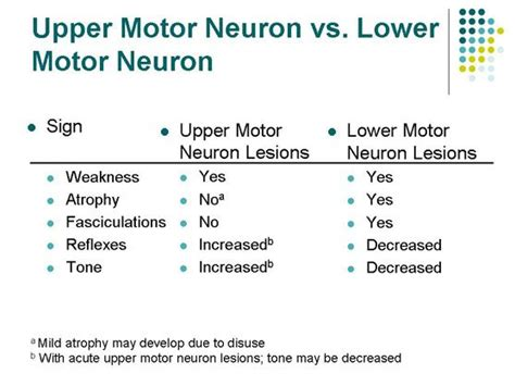 Umn Search Umn Vs Lmn Physical Therapy Search Motor Neuron And Motors