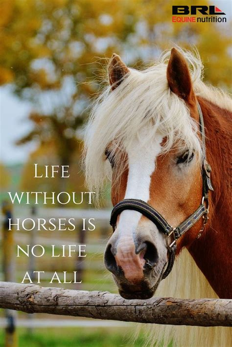 quotes about horses quotes and sayings www pixshark
