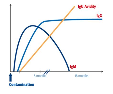 avidity test cmv vidas 174 torc serodiagnosis of torc in