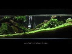 design aquascape online 1000 images about aquarium on pinterest aquascaping