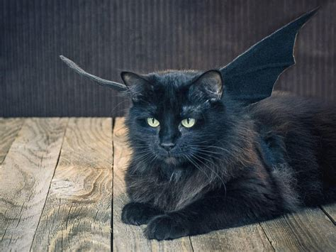 Inidia Cat 25 25 terrifyingly costumes for pets