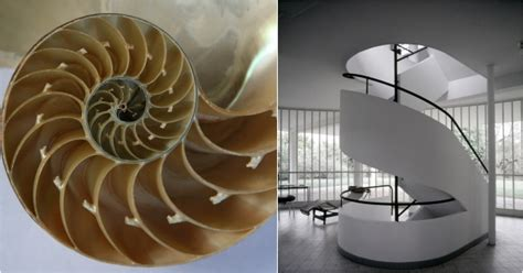 nautilus shell kirlian photograph photograph le corbusier s objects of poetic reaction