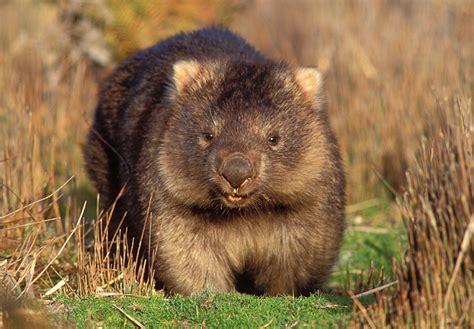 new year animals sydney more than just a pretty australian animals