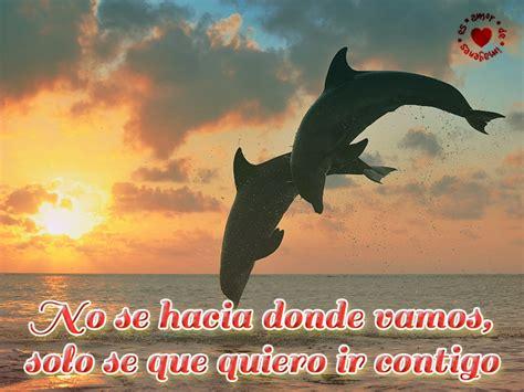 imagenes de amor animadas de delfines hermosas im 225 genes de amor en el mar