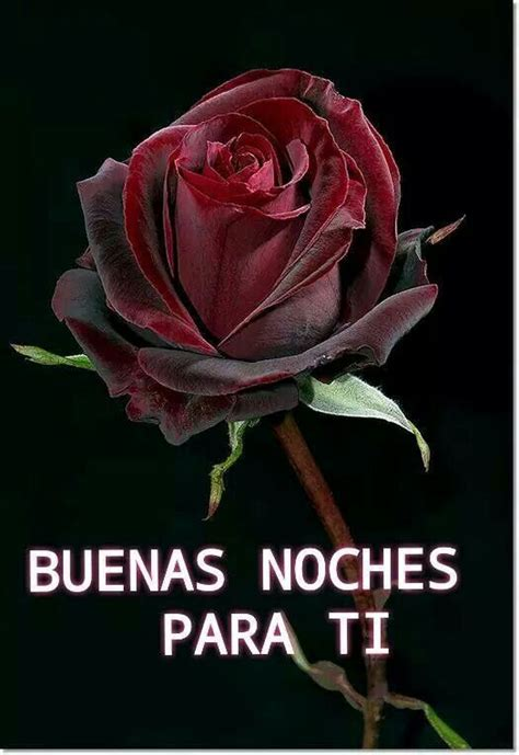 imagenes buenas noches rosas 17 best images about buenas noches on pinterest te amo