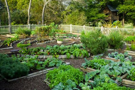 Backyard Vegetable Garden Design Ideas Home Design Ideas Backyard Garden Layout