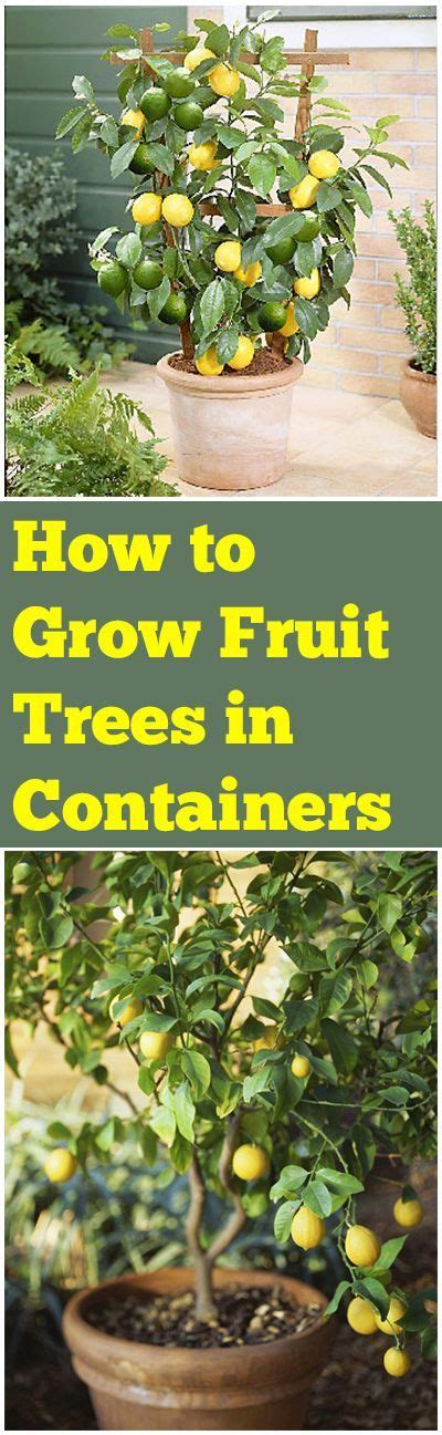 how to grow apple trees in backyard 177 best images about how to garden on pinterest