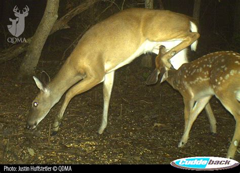 what can i feed the deer in my backyard what can i feed the deer in my backyard 28 images what
