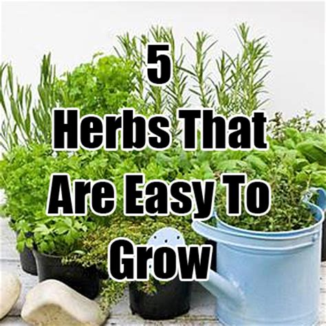 how to grow a herb garden 5 herbs that are easy to grow
