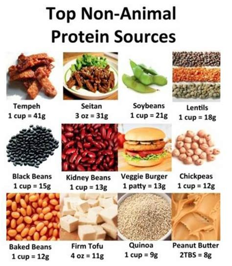 Sources Of Protein by Top Non Animal Protein Sources Healthy Veggie Food Tips