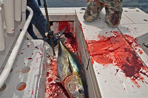 bluefin tuna tackle bd outdoors