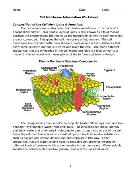 worksheet cell membrane worksheet grass fedjp worksheet