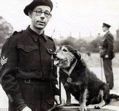Rip Sgt Stubby 1000 Images About Dogs Dogs Dogs On War Dogs Jeeps And Dogs