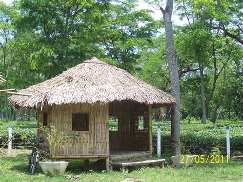 Garden Hut by Amalgamated Tea Garden Hut Chabua India Travel Forum