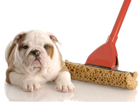 when to potty a puppy how to potty puppy tips