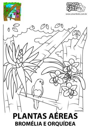desenho de plantas colorir desenho plantas terrestres desenhos para colorir