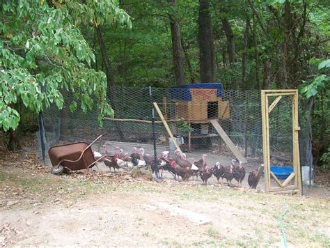 Backyard Chicken Coops Pics Of Your Turkey Coops
