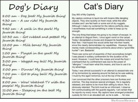 vs cat diary dogs diary vs cats diary weknowmemes