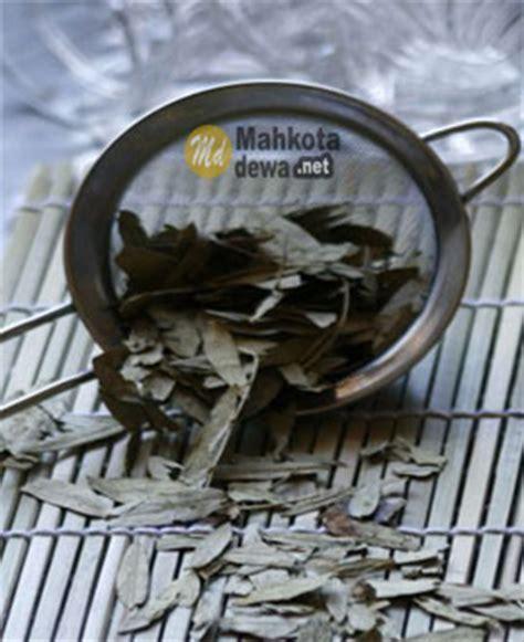 Jati Cina Cassia Angustifolia 25kapsul Teh Jati Cina 25kpsl manfaat dan kandungan daun jati cina teh herbal