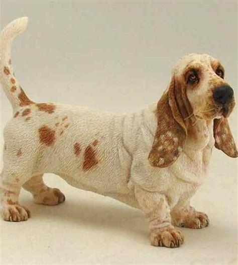 lemon basset hound puppies lemon basset hound dogs dogs dogs