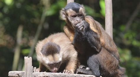 imagenes de animales jungla animales de la selva peruana animalesde net