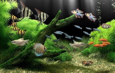 dream aquarium  worlds  amazing virtual aquarium
