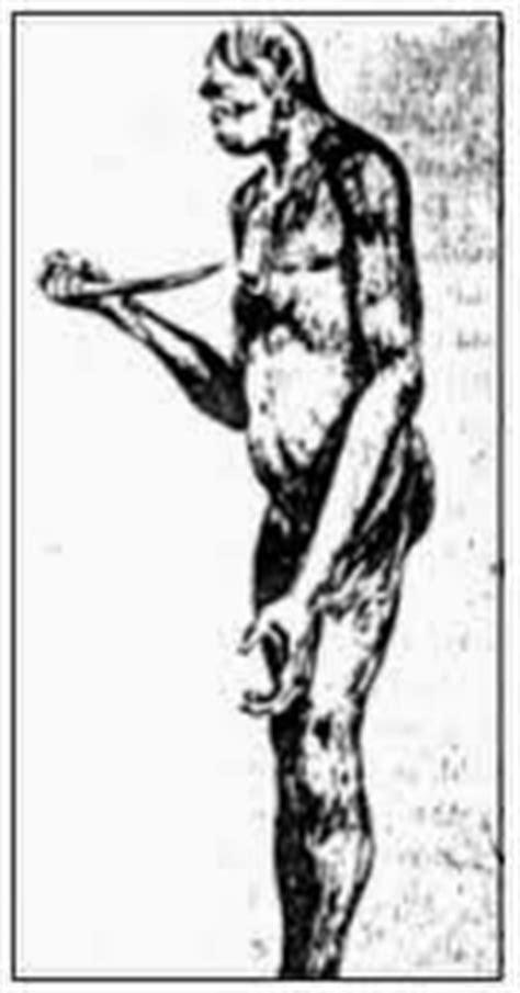 kumpulan gambar manusia purba foto manusia purba sapiens soloensis wajakersis mojokertensis
