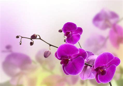 imagenes de flores naturales orquideas cuidando bem de suas orqu 237 deas flores cultura mix