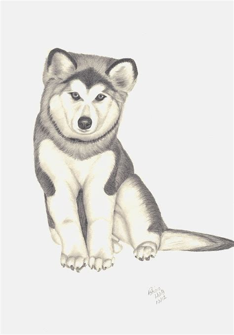husky puppy drawing my husky puppy drawing by hiltz