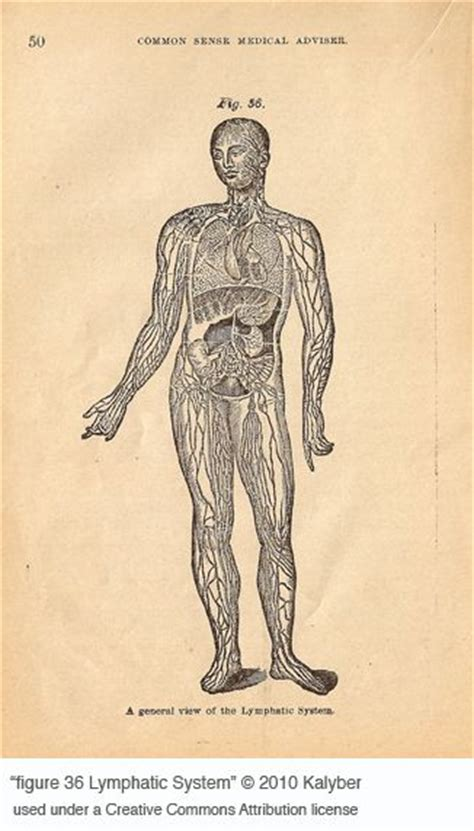Ways To Detox Lymphatic System by 7 Way To Detox Your Lymphatic System Oh So Healthy
