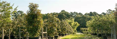 100 christmas tree farms near houston trail creek