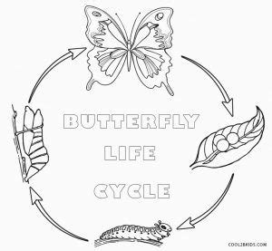butterfly life cycle coloring sheet homeschool 26 best butterfly images on pinterest diy butterfly
