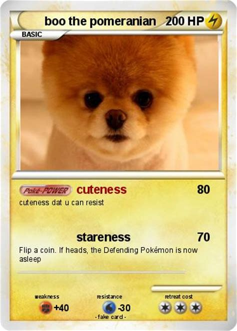 boo the pomeranian pok 233 mon boo the pomeranian cuteness my card