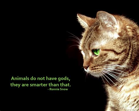 cat wallpaper with quotes anti religious wallpaper and background 1280x1024 id