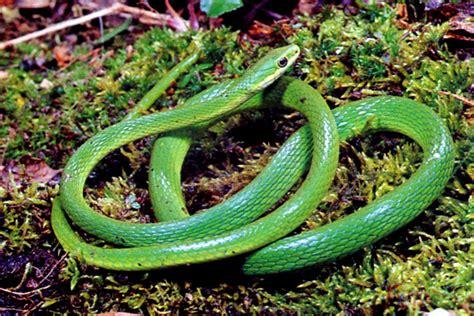 flabbergasting english garden snakes   dangerous