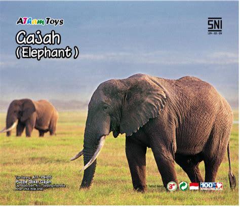 Mainan Kayu Edukatif Puzzle Cat 17 X 17 Cm Kura2 puzzle sticker 17x20 gajah mainan kayu