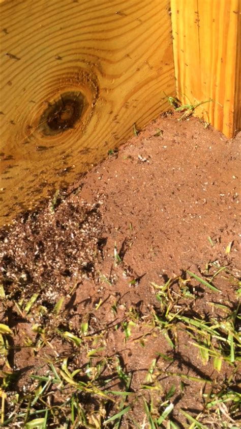Fire Ants In The Garden Tallahassee Com Community Blogs Ants In Vegetable Garden