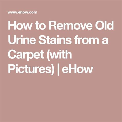 how to remove urine stains from upholstery 17 best ideas about urine stains on pinterest carpet