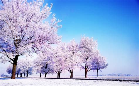 wallpapers winter free download winter wallpapers backgrounds hd free download