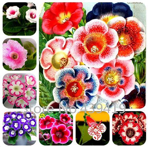 aliexpress com buy 100 seeds bag gloxinia seeds plant