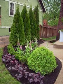 landscaping plants hgtv