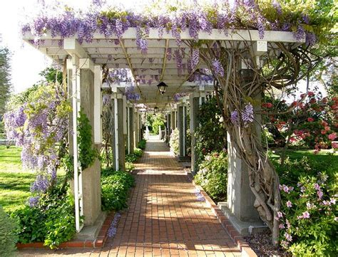 Pergola Modern 1856 by The Story Of The Wisteria Covered Arbor Garden