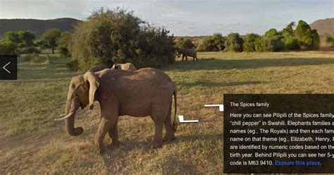 google images elephant a google view of elephants the new york times