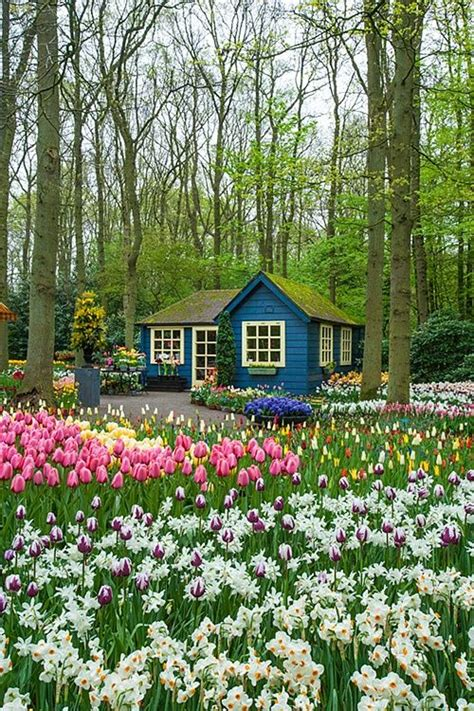 17 best images about small blue gardens beautiful and