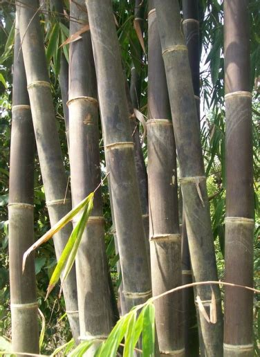 dinding bambu studi bahan bangunan universitas diponegoro