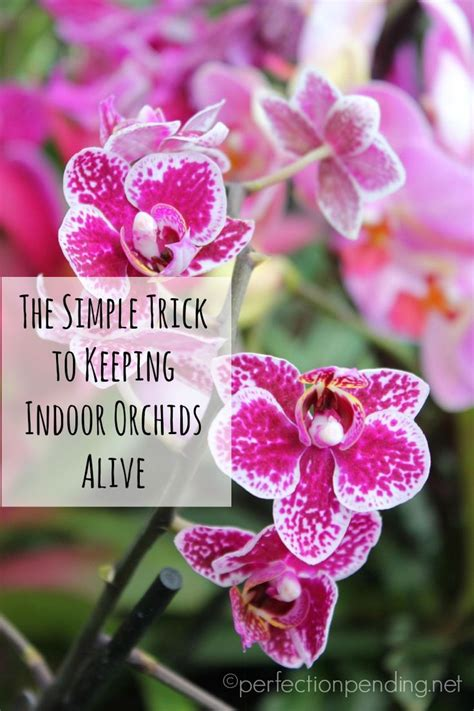 How To Keep Flowers In A Vase Alive Longer The 25 Best Orchids Garden Ideas On Pinterest Orchid In