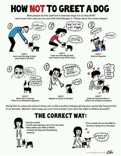 puppy manners manners 101 pets