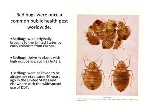 when do bed bugs come out do bed bugs come out in the daytime 28 images do bed