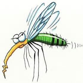 Qu Est Ce Qui Attire Les Moustiques